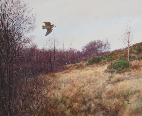 Woodcock/ Shooting/ Hunting/ Images/Paintings/Art Waldschnepfe/ Jagd/ Schießen/ Kunst/ Bild/ Gemälde