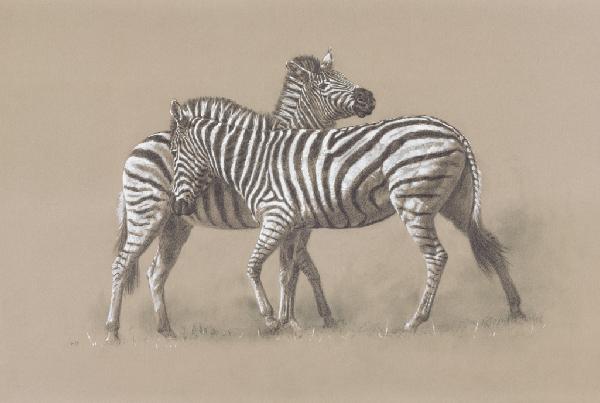 Burchell's Zebra/ Images/Paintings/Art Burchell's Zebra/ Kunst/ Bild/ Gemälde