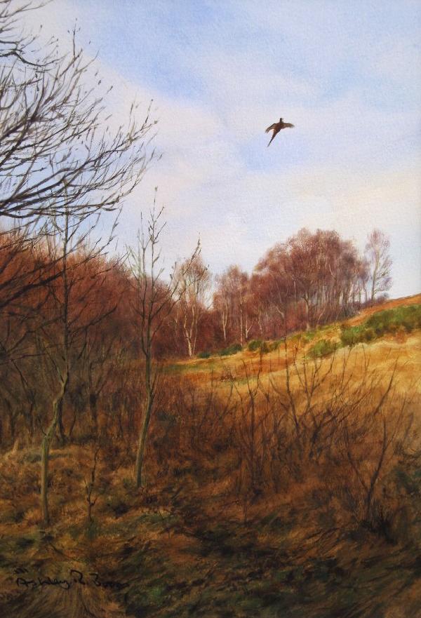 Ashley Boon Wildlife & Sporting Artist Wildlife Art/ Paintings/Images Bird Paintings/Art/Images Animal Paintings/Art/Images British Wildlife British Birds