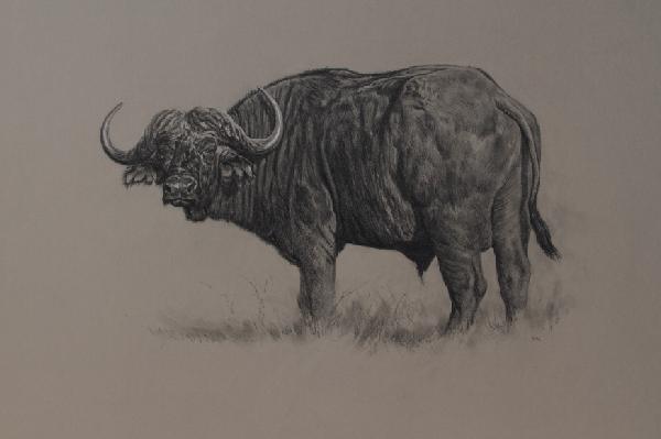 Blue Wildebeest Bull | Ashley Boon | Wildlife Artist