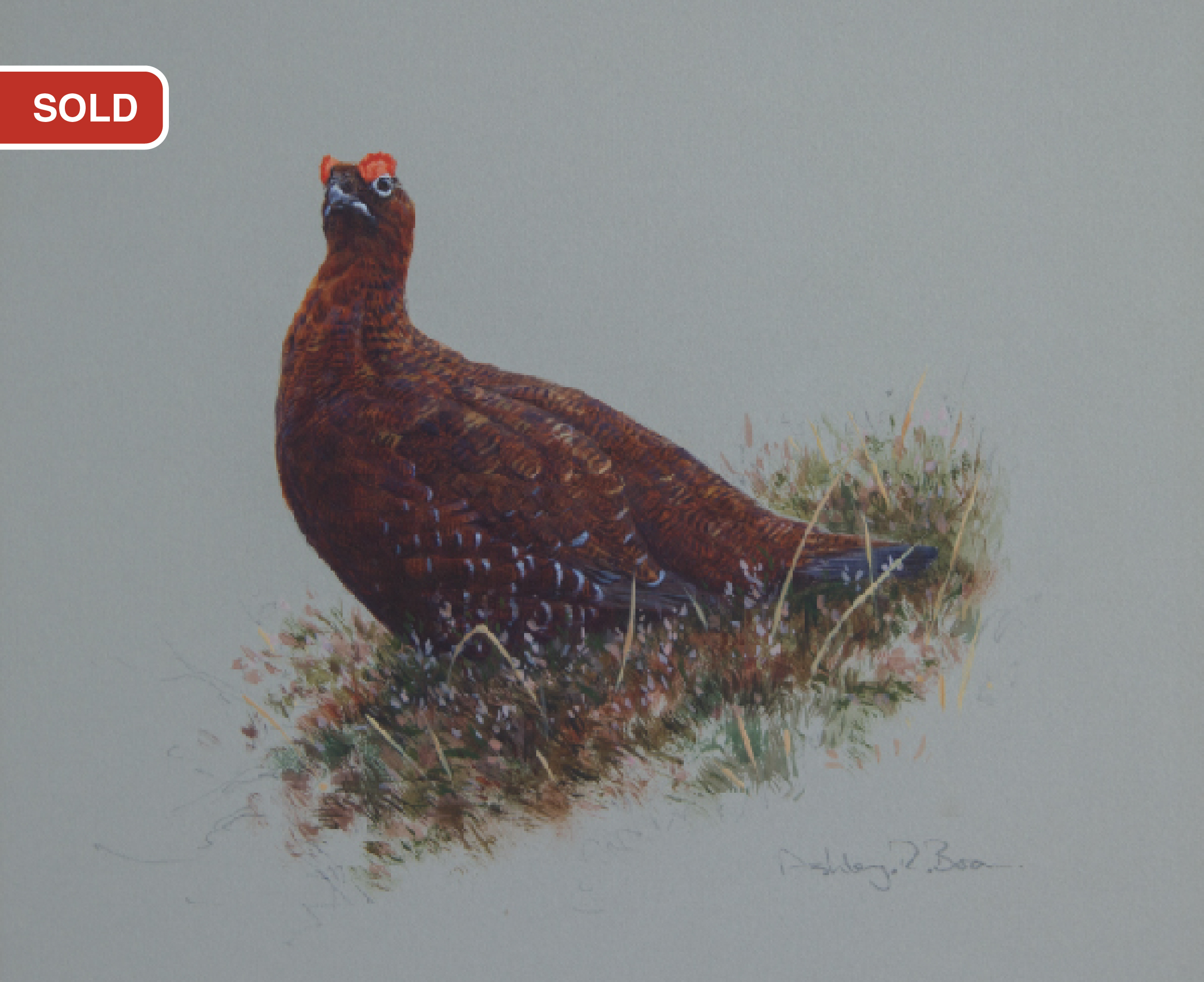 Red Grouse/ Driven Grouse, Grouse Shooting/ Images/Paintings/Art Getriebene Moorschneehühner/ Kunst/ Bild/ Gemälde