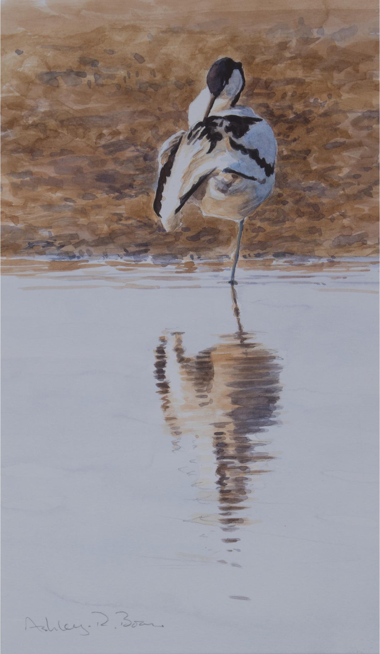 Avocet Sketch, Norfolk | Ashley Boon | Wildlife Artist