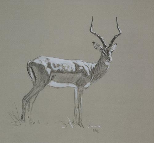 Impala/ Images/Paintings/Art Impala/ Kunst/ Bild/ Gemälde